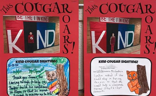 Kind Cougar Sightings